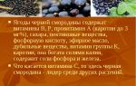 Витамины в черной и красной смородине