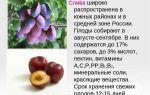 Какие витамины в сливе