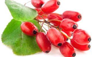 Барбарис — полезные свойства, рецепты лечения, противопоказания
