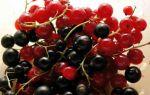 Черная смородина — полезные свойства и противопоказания