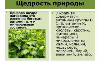 Витамины в крапиве
