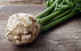 Корень сельдерея — рецепты, полезные свойства, противопоказания