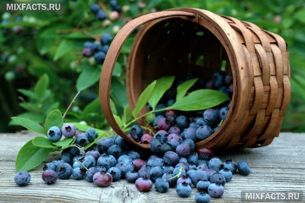 Какие витаминами богата черника
