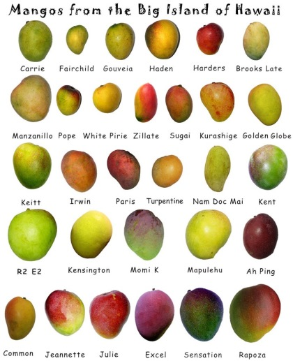 Витамины в манго - Азбука витаминов
