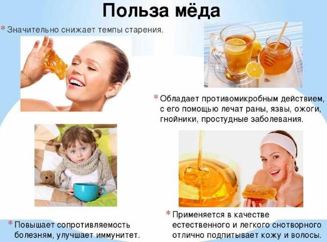 Алтайский горный мед: полезные свойства и противопоказания
