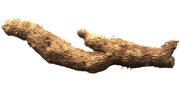 Адамов корень — применение, лечебные свойства настойки
