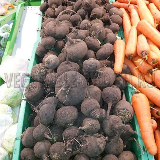Черная редька — польза, вред, лечебные свойства, рецепты