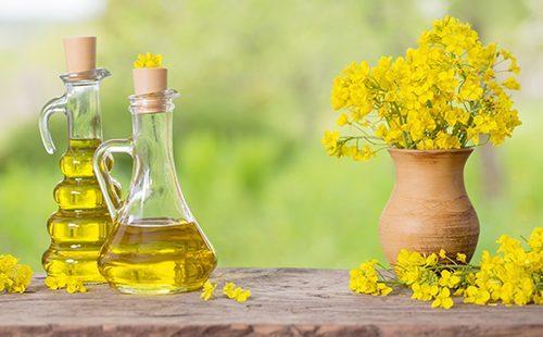 Рапсовое масло — вред и польза, в кулинарии, как применять