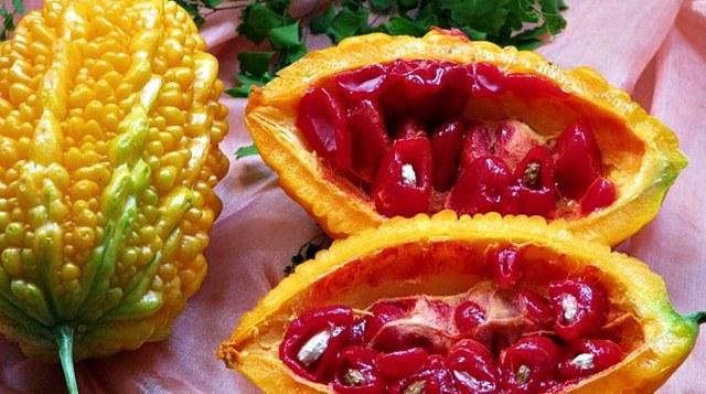 Индийский огурец — лечебные свойства и противопоказания, выращивание