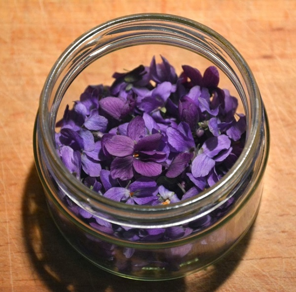 Фиалка трехцветная — лечебные свойства и противопоказания