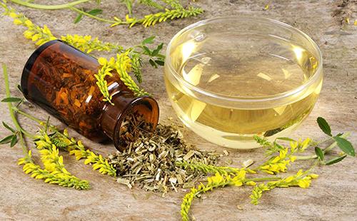 Донник — лечебные свойства и противопоказания, применение