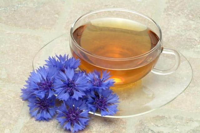 Василек синий — лечебные свойства, противопоказания, применение