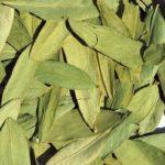 Сенна трава — польза и вред, применение от запора, для похудения