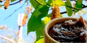 Хвощ полевой: состав, полезные свойства и противопоказания, рецепт