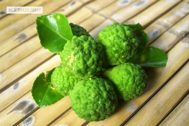 Бергамот — что это за растение, свойства, польза и вред