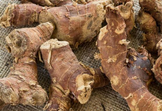 Корень калгана — лечебные свойства и противопоказания