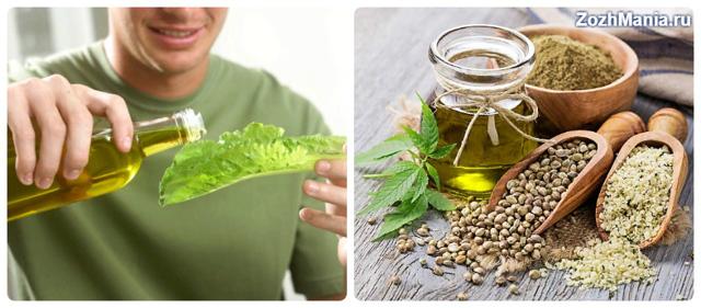 Конопляное масло: польза и вред для здоровья, как принимать