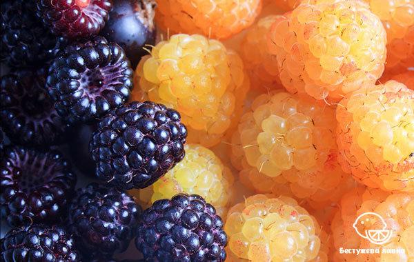 Малина: свойства, польза и вред для здоровья