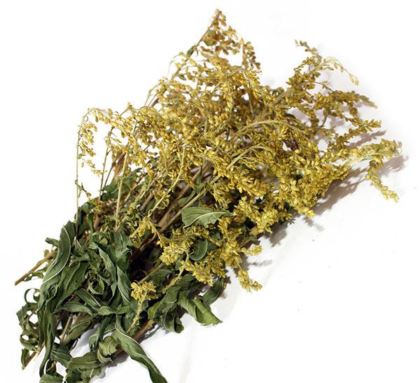 Золотарник — лечебные полезные свойства и противопоказания