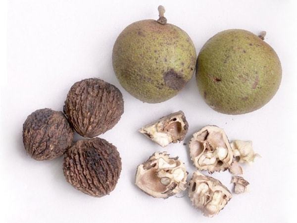 Черный орех — применение, свойства, польза, противопоказания
