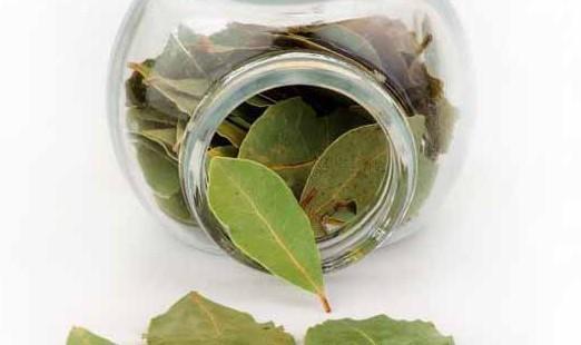 Лавровый лист: свойства, польза и вред для организма