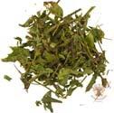 Галега — лечебные свойства травы и противопоказания