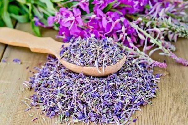 Иван-чай — лечебные свойства, противопоказания, как заваривать