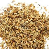Бузина травянистая — лечебные свойства, противопоказания