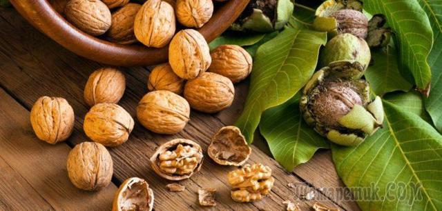 Грецкий орех — польза, вред, свойства, применение