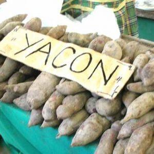 Якон — описание, свойства, польза, противопоказания