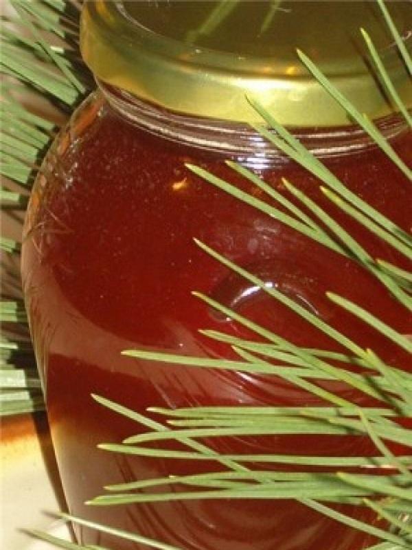 Почки сосны — полезные свойства и противопоказания, как применять