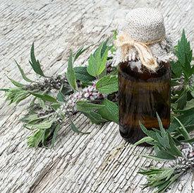 Трава пустырник — лечебные свойства и противопоказания, польза