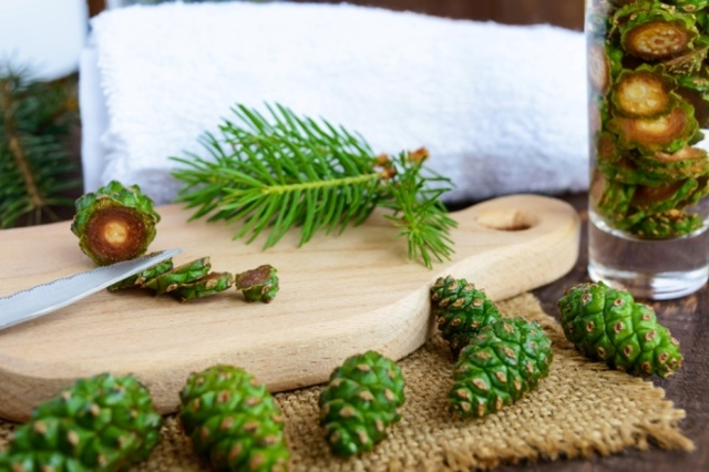 Шишки сосны — польза, вред, рецепты, свойства, когда собирают