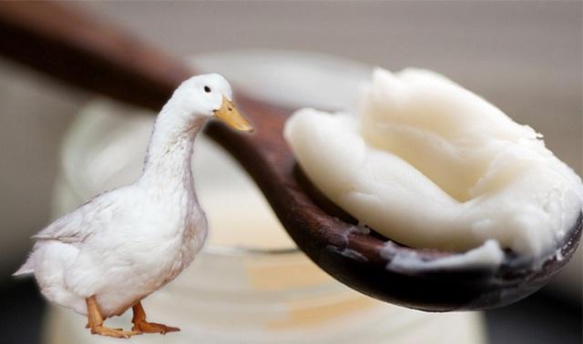 Гусиный жир — лечебные свойства, противопоказания, применение